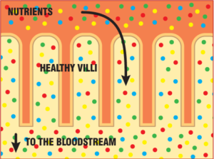 Exeter Gut Clinic coeliac disease bloodstream-nutrients in a healthy person
