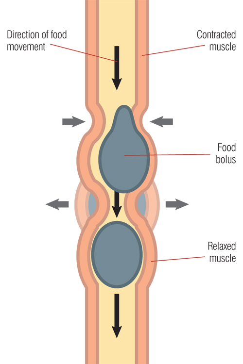 Why is IBS painful diagram